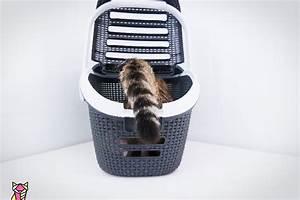 Panier Pour Chat Original : panier pour chat tests avis et s lection du meilleur panier chat ~ Teatrodelosmanantiales.com Idées de Décoration