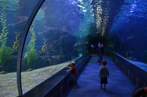 busan busan aquarium paisajes