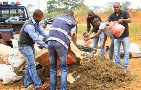 Cuanza Norte Polícia Incinera 578 Plantas De Liamba