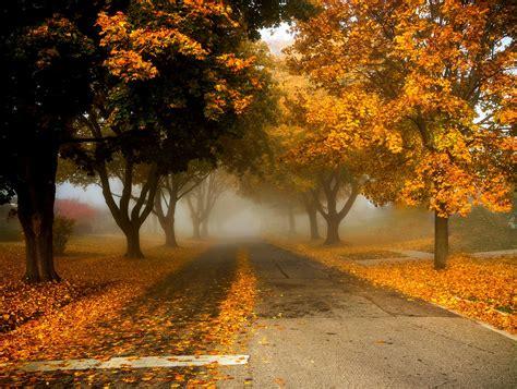 autumn trees     photography