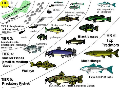 type  fish   negeri  fish tank