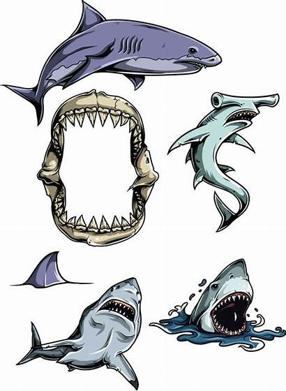 Vector Clipart Sharks Vectors Shark Illustration Illustrations