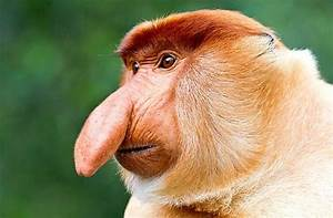 Why ugly animals should be wildlife pin-ups ...