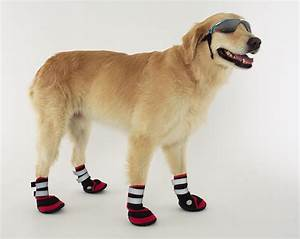 Dog apparel paw wear boots socks z other for Dog shoes for dogs