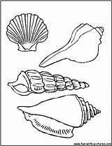 Coloring Shells Sea Seashells Seashell Pages Shell Pretty Printable sketch template