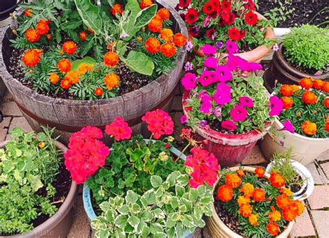 Simple Patio Container Gardens — Home & Plate
