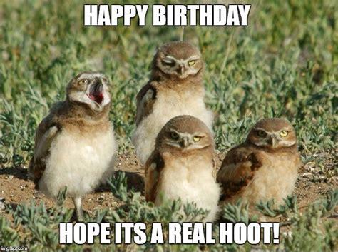 Owl Birthday Meme - burrowing owls imgflip
