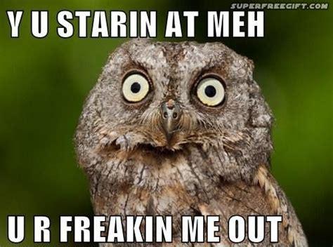 Owl Who Meme - 36 best wise owl memes images on pinterest