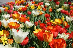 Blumen Im Frühling : lizenzfreie bilder fotos ohne anmeldung ~ Orissabook.com Haus und Dekorationen