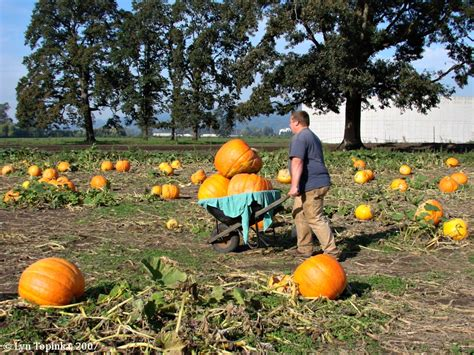 poured epoxy flooring springfield mo 13 vancouver washington pumpkin patch maple