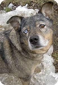 Libby | Adopted Dog | Cambridge, ON | Siberian Husky ...