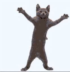 animated cat cats and kittens and kitty cat gif animations