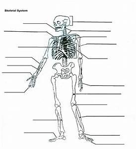 Diagrams of the Skeletal System | Diagram Site