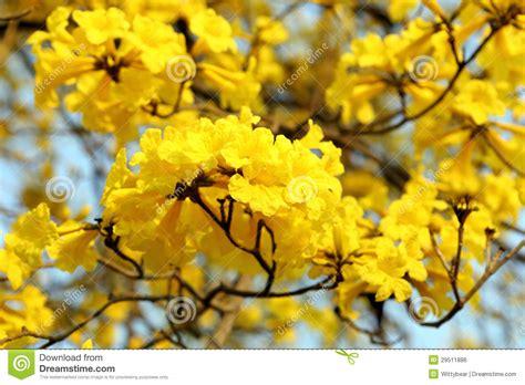 yellow flower blossom stock photo image  design close
