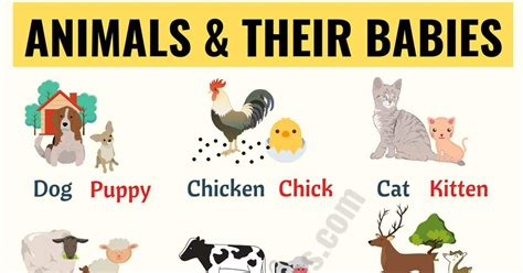 Baby Animals: List of Popular Animals and Their Babies