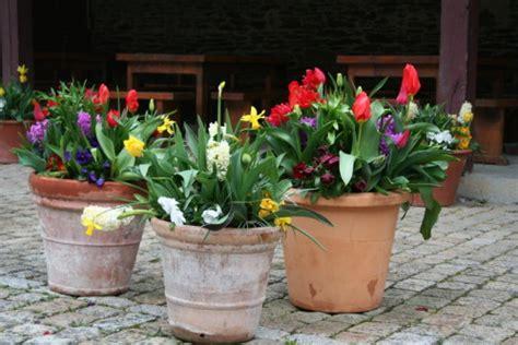 petits bulbes de printemps les conseils de jardin de vavou