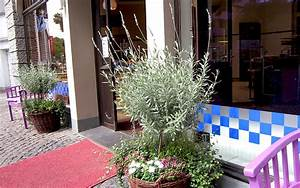 Lavendel Sorten übersicht : strauch lavendel pflanze lavendel duftpflanzen r hlemann 39 s kr uter und duftpflanzen ~ Eleganceandgraceweddings.com Haus und Dekorationen