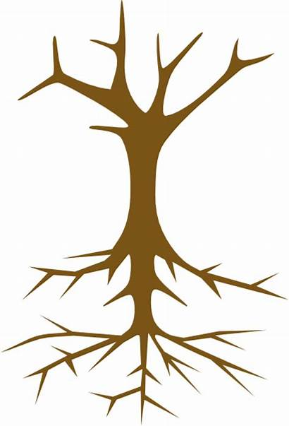 Tree Root Clipart Clip Skeleton Roots Stuck