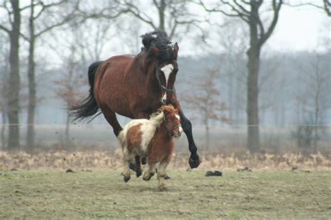 horsepower does mean horse actually pony