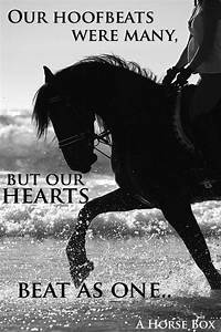Our Hoofbeats may vary but our hearts beat as one. #love # ...