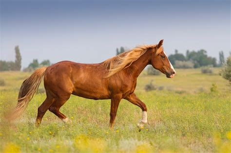 horses care dental need horse teeth