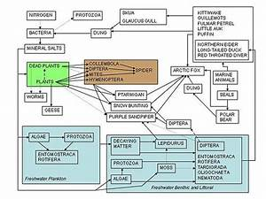 High School Earth Science  Ecosystems