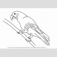 Learn How To Draw A Kaka (parrots) Step By Step  Drawing Tutorials