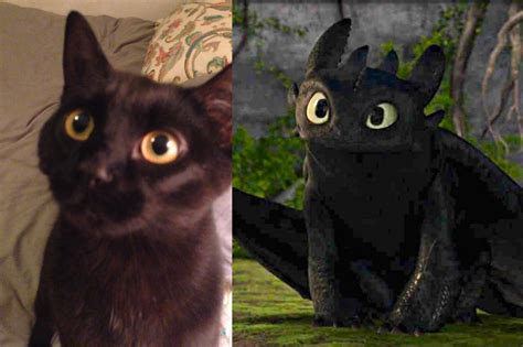 cat willow   toothless    train