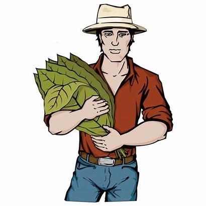 Clipart Tobacco Farm Farming Webstockreview Illustrations Watercolor