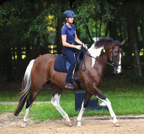 bridle bitless dressage horse debate horses bridles riding simple dressagetoday paint training bit without side pull natural tack care gelding