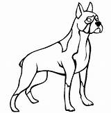 Boxer Coloring Dog Standing Tall sketch template