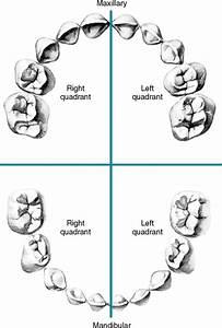 Upper Right Quadrant Mouth