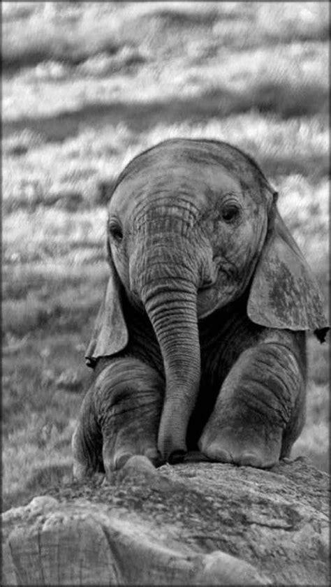 baby elephant sitting  black  white   hq  puzzle games  newcastlebeach