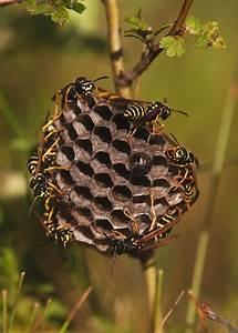 Was Vertreibt Wespen : wespennest vertreiben excellent weitere zu wespen ~ Articles-book.com Haus und Dekorationen