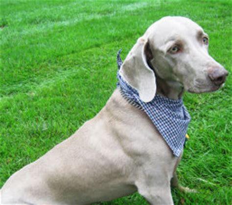 quick draw mcgraw puppy bandana allfreesewingcom