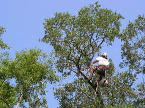tree service lake county il affordable tree service