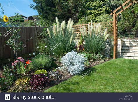 Pampas Grasses In A Suburban Back Garden, Bath Spa