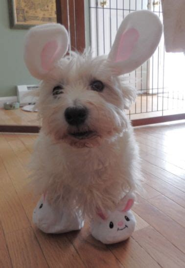 funny  easter dogs chris cannon