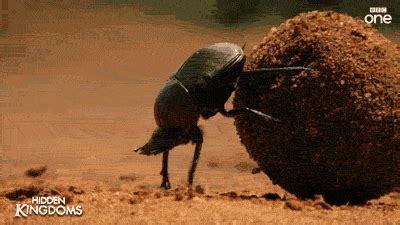 animated bugs insects dragonflies gifs
