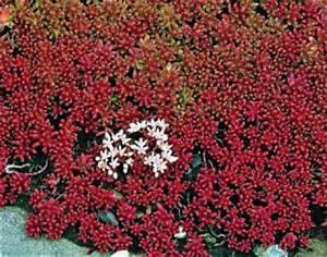 Extensive Dachbegrünung Pflanzen : zeobon gmbh pflanzen extensiv ~ Frokenaadalensverden.com Haus und Dekorationen