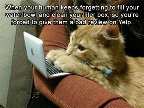 Animal Memes Clean - funny animal pictures of the day 23 pics funny animals pinterest funny animal pictures