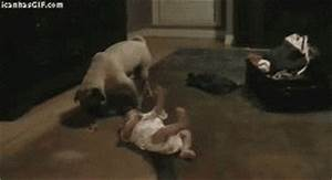 Dog Deal With It GIF - Find & Share on GIPHY
