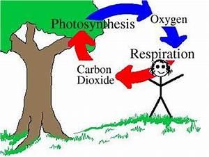 Biology  U0026gt  Simons  U0026gt  Flashcards  U0026gt  13 5 Cycling Of Matter