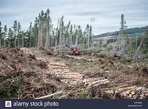 Fällen Von Bäumen : forestry harvester stockfotos forestry harvester bilder alamy ~ Eleganceandgraceweddings.com Haus und Dekorationen