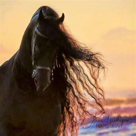 Zeig Mir Dein Bild by Zeig Mir Bilder Pferden F 252 R Bilder Und