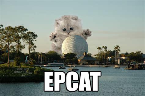 Disney World Memes - 20 hilarious disney memes