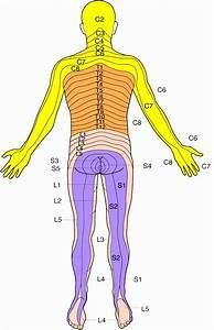 Abdominal Dermatome Map