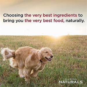 Diamond naturals large breed puppy formula dry dog food for Akc dog food