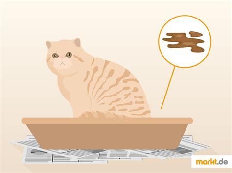 tun wenn die katze durchfall hat marktde
