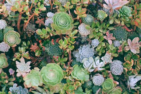top angle photography  succulent plants photo